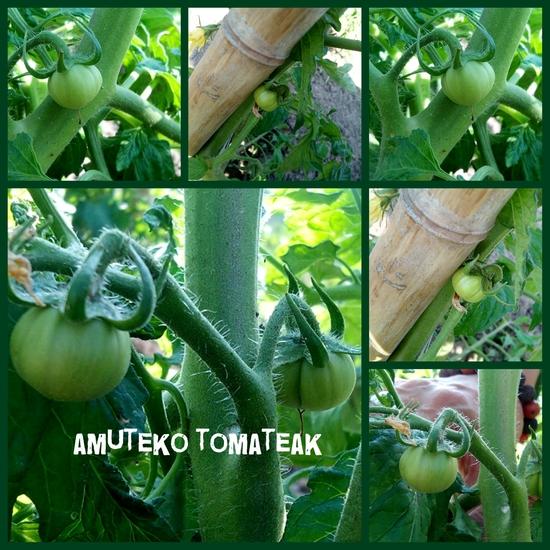 collage_20140614001526633.jpg